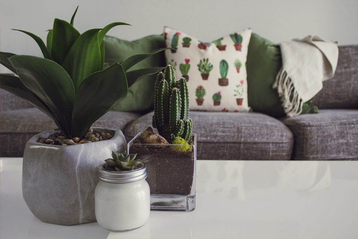 Three potted plants sit on a coffee table in the foreground. In the background is a grey couch with throw pillows. It's a small living room.